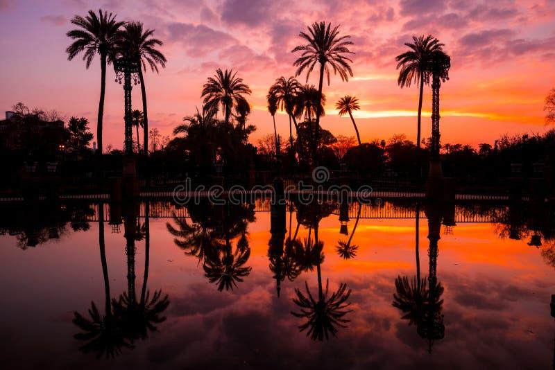 Palmeras reflejadas en el agua en Maria Luisa Park en la puesta del sol, Sevilla, Andalucía, España fotografía de archivo libre de regalías