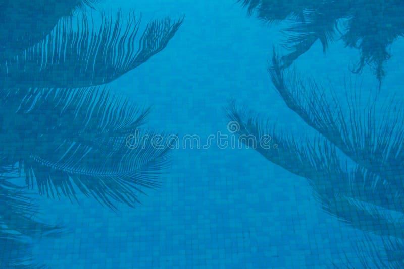 Palmeras reflejadas en piscina azul foto de archivo
