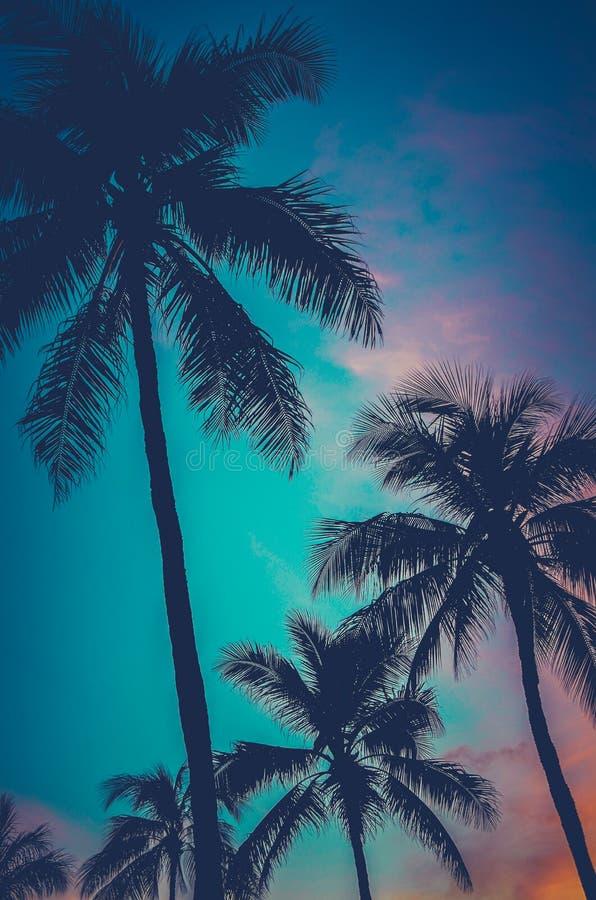 Palmeras retras de Hawaii de la puesta del sol fotos de archivo libres de regalías