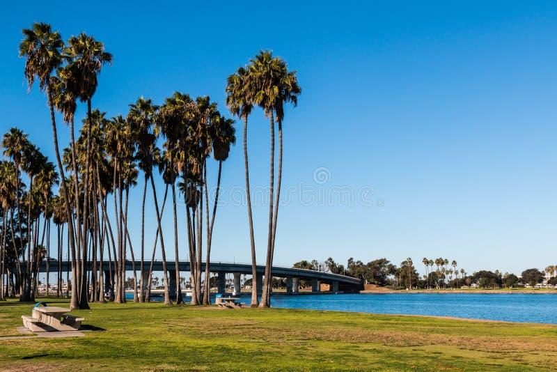 Palmeras Robusta de Washingtonia en bahía de la misión en San Diego fotografía de archivo