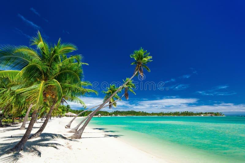 Palmeras sobre la playa blanca en una isla de la plantación, Fiji imagen de archivo libre de regalías