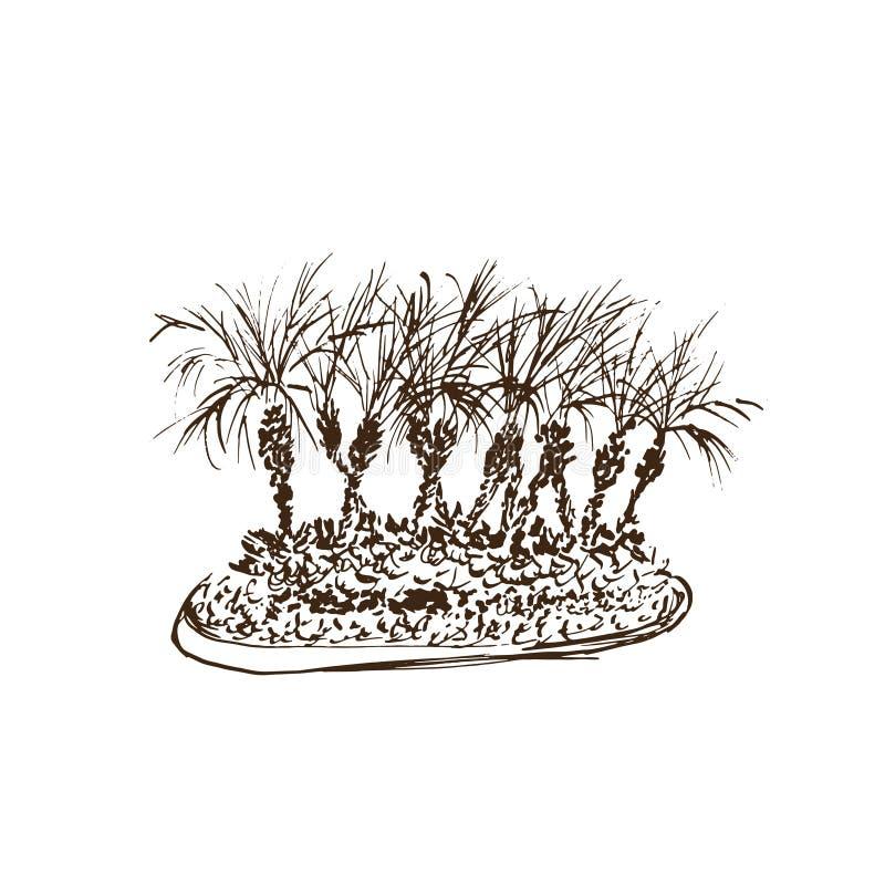 Palmeras tropicales aisladas en el fondo blanco Ejemplo del grupo de las palmas de coco Bosquejo dibujado mano del vector ilustración del vector