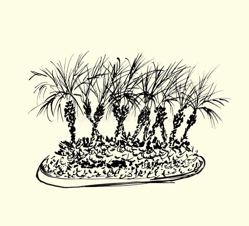 Palmeras tropicales aisladas en fondo ligero Ejemplo del grupo de las palmas de coco Siluetas negras Bosquejo drenado mano stock de ilustración