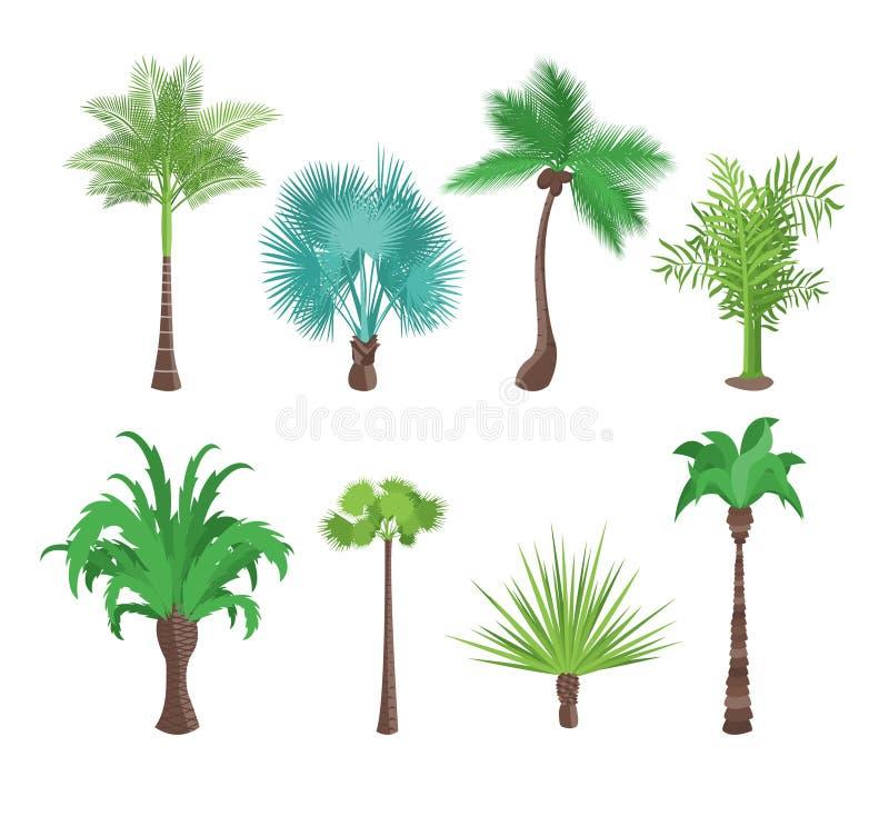 Palmeras tropicales verdes decorativas fijadas Vector ilustración del vector