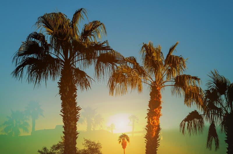 Palmeras un horizonte hermoso y palmeras en la puesta del sol fotografía de archivo