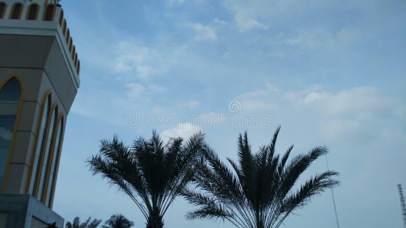 Palmeras verdes en el jardín de la mezquita con el fondo del cielo azul fotografía de archivo