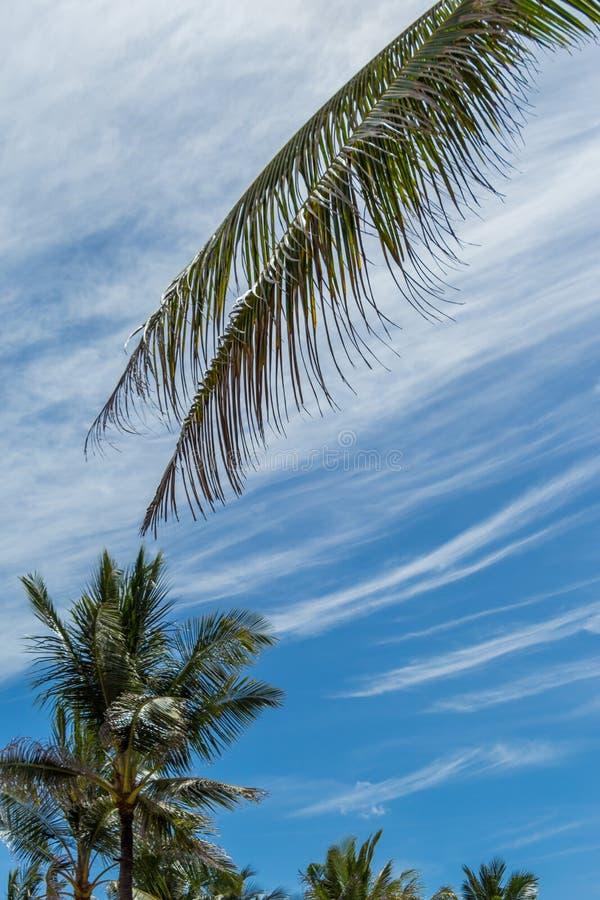Download Palmeras Verdes Tropicales En Bali, Indonesia Foto de archivo - Imagen de coco, fondo: 41910876