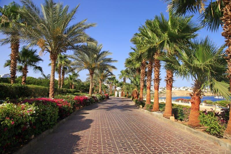 Palmeras y acera, Sharm el Sheikh, Egipto fotos de archivo libres de regalías