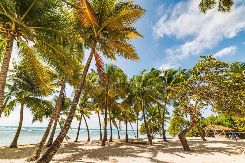 Palmeras y arena blanca en la playa de Bois Jolan imagen de archivo libre de regalías