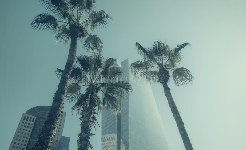 Palmeras y edificios modernos en Tel Aviv, ISRAEL fotografía de archivo libre de regalías