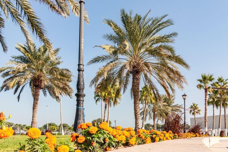 Palmeras y flores a lo largo de la calzada peatonal en el Doha, la capital de Qatar foto de archivo libre de regalías