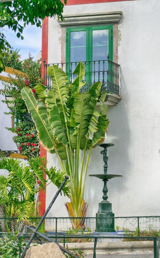 Palmeras y fuente delante de una ventana española foto de archivo