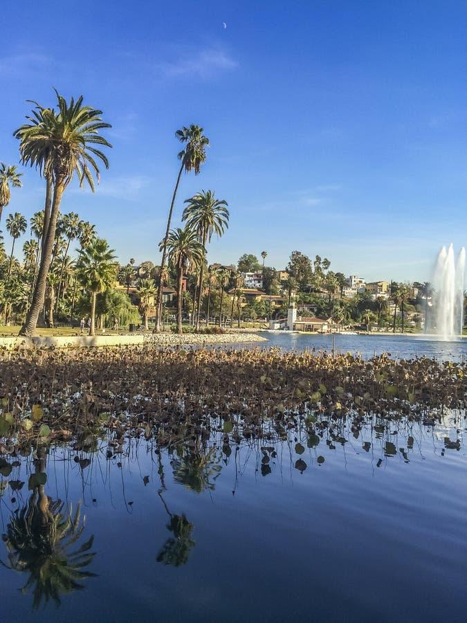 Palmeras y reflexión de la fuente en el lago echo Park foto de archivo libre de regalías