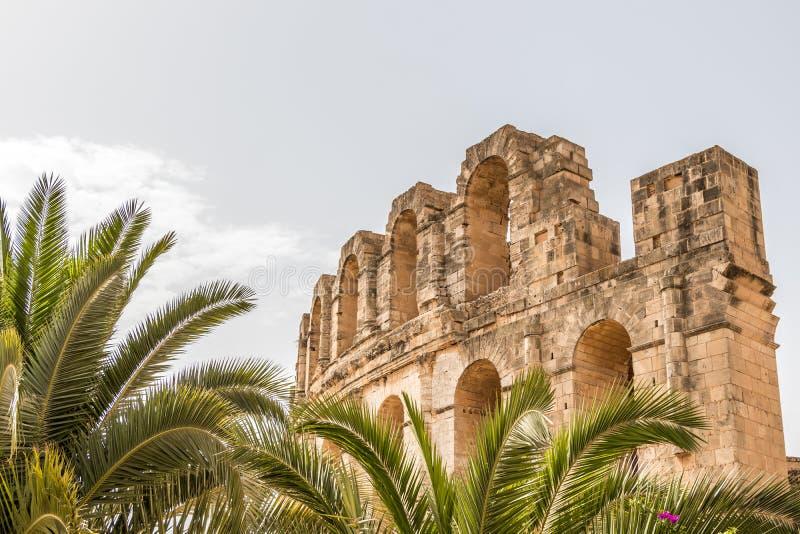Palmeras y Roman Amphitheatre del EL Djem, Túnez, África fotos de archivo
