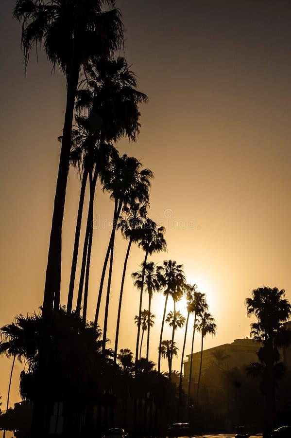 Palmeras y salida del sol foto de archivo libre de regalías
