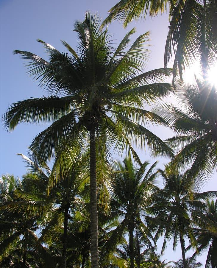Palmeras y Sun imagen de archivo libre de regalías