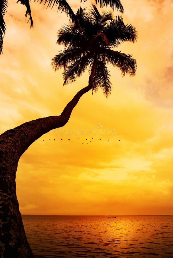 Palmeschattenbild auf tropischem Strand des Sonnenuntergangs lizenzfreie stockbilder