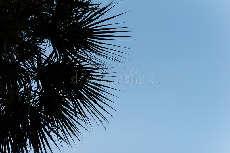 Palmeschattenbild mit blauem Himmel stockbild