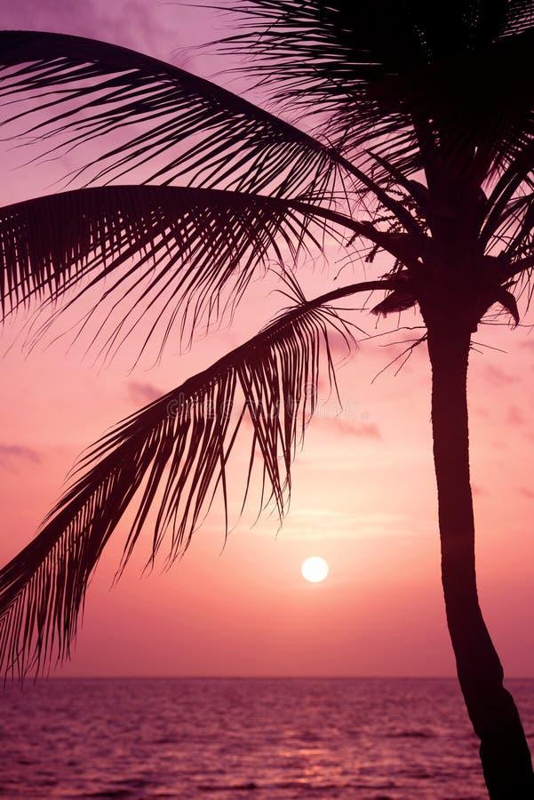 Palmeschattenbild am tropischen Strand des Sonnenuntergangs Orange Sonnenuntergang stockfoto