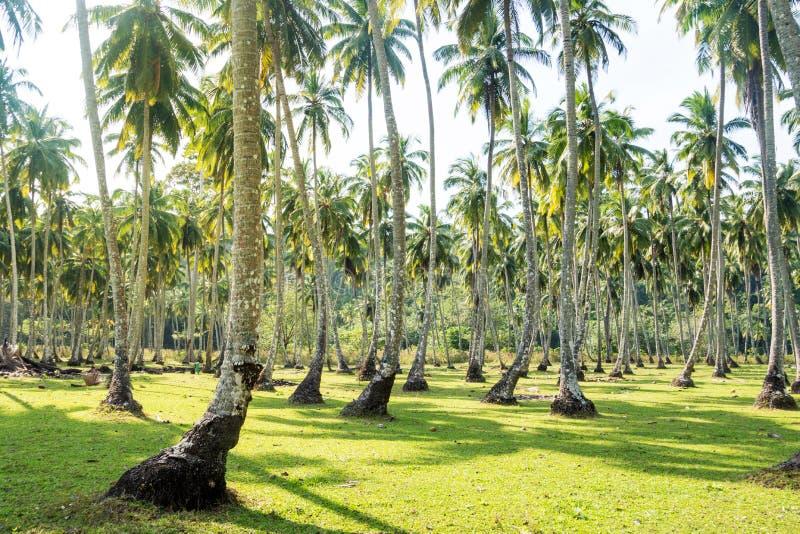 Palmeti in un giardino fotografia stock
