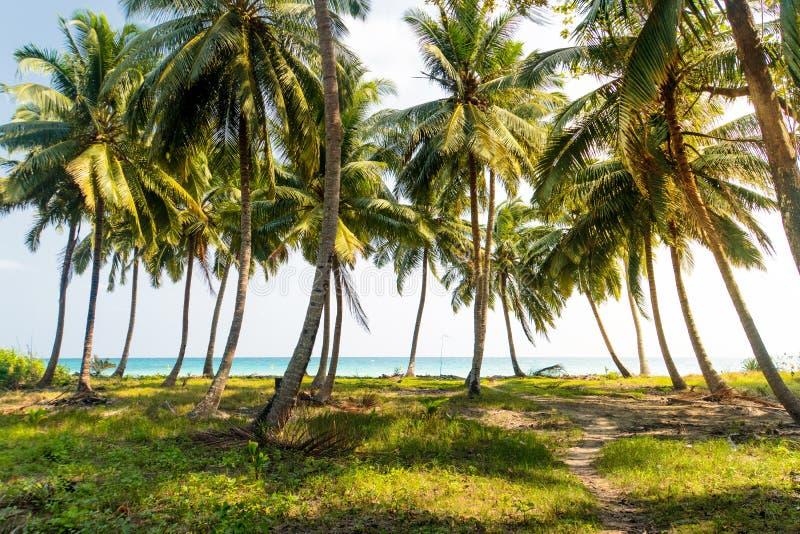 Palmeto sull'isola Prato inglese costiero sotto una palma fotografia stock libera da diritti