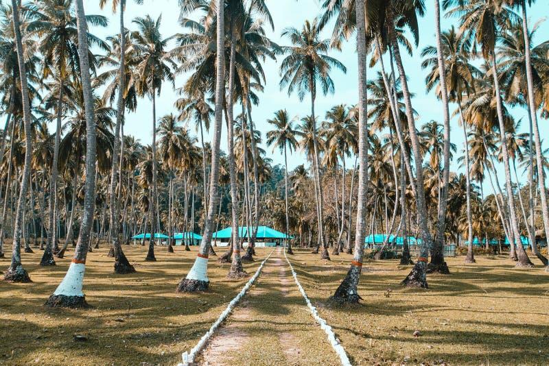 palmeto sulla riva dell'Oceano Atlantico fotografie stock libere da diritti