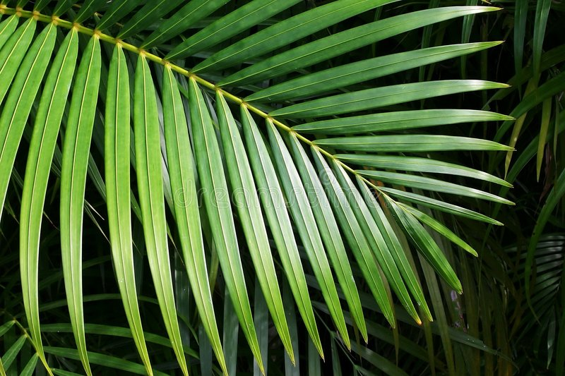 Palmette photos libres de droits