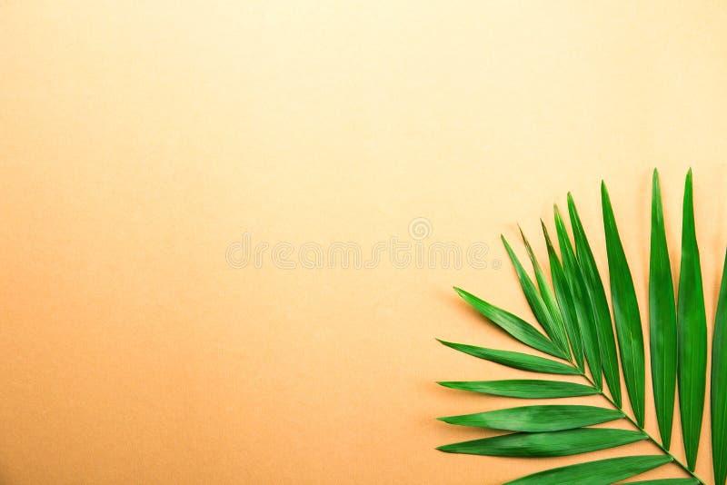 Palmette simple de salon sur le fond orange de gradient photo stock