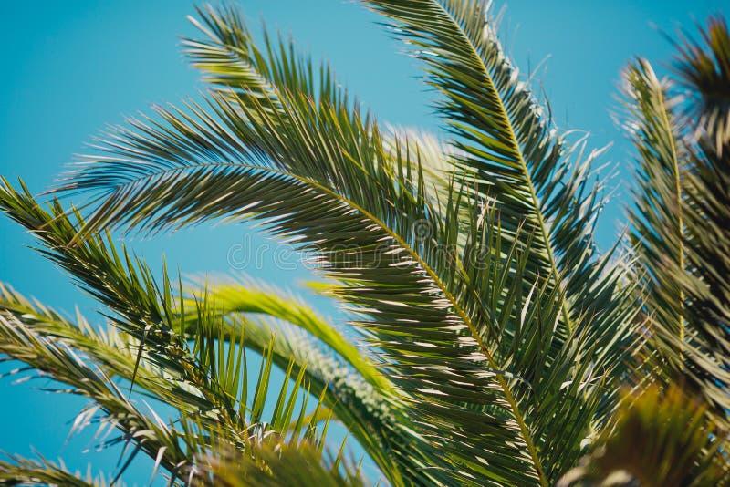 Palmette verte au-dessus de fond de ciel photo libre de droits