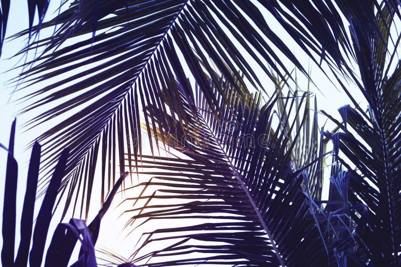 Palmette verte au-dessus de fond de ciel Belle photo en feuille de palmier avec le ton déprimé d'effet photos stock