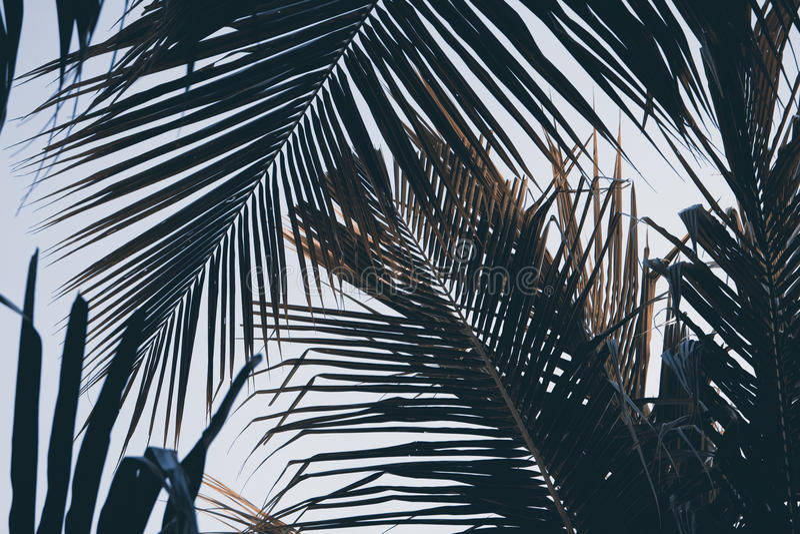 Palmette verte au-dessus de fond de ciel Fond de palmettes Copie ou affiche tropicale de vintage de nature images libres de droits