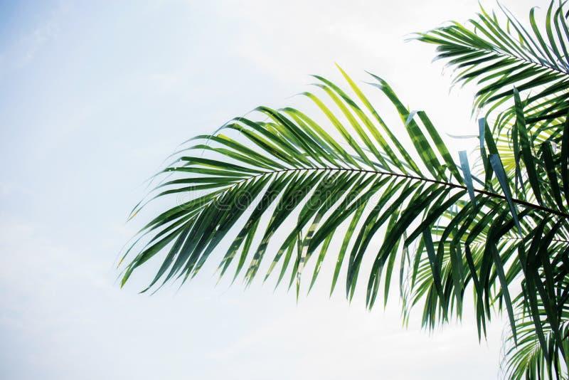 Palmettes avec le ciel bleu images stock