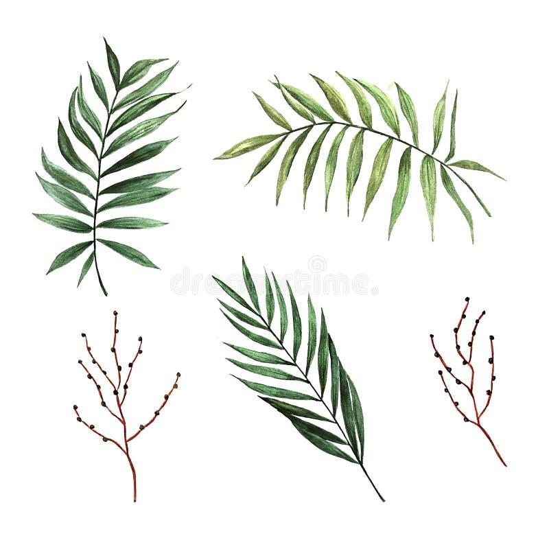 Palmettes d'aquarelle avec des graines illustration libre de droits
