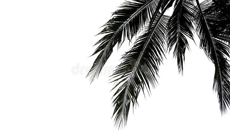 Palmettes d'isolement sur le fond blanc photos stock
