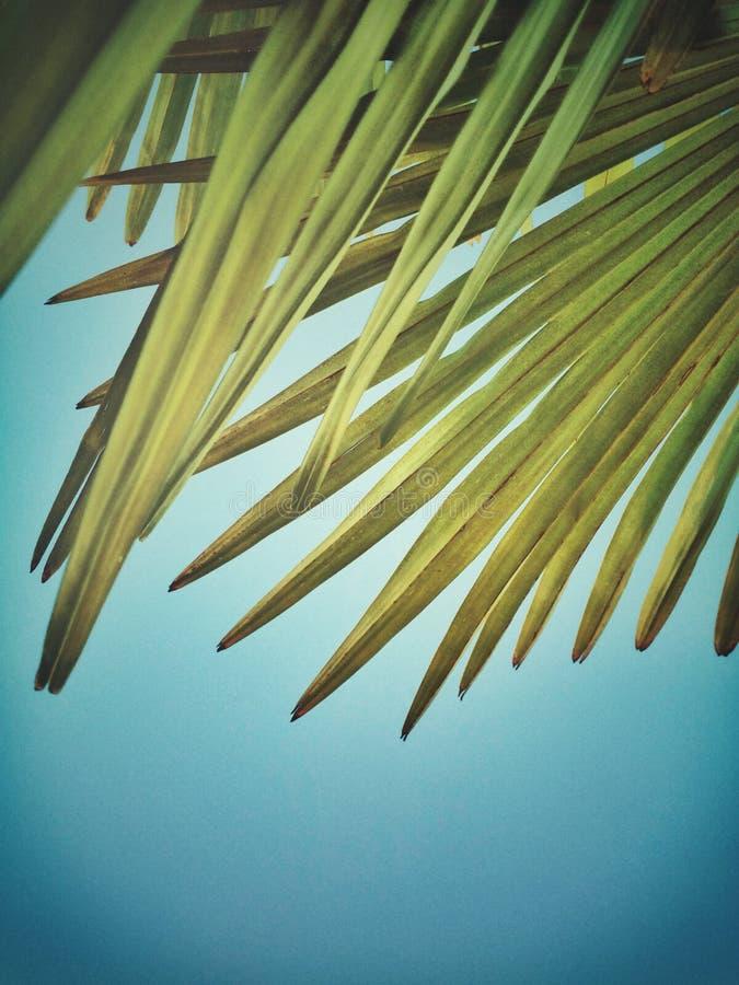 Palmettes et ciel bleu photographie stock libre de droits