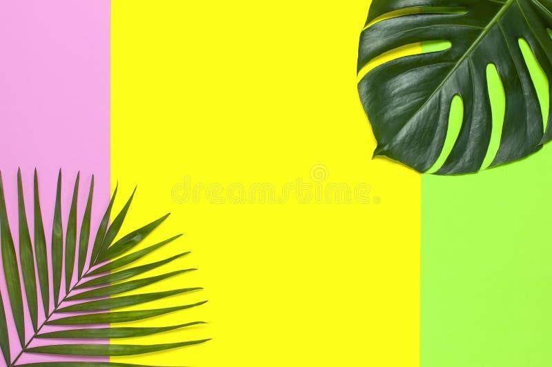Palmettes et feuille tropicales de monstera sur le fond rose vert jaune Configuration plate, vue sup?rieure, l'espace de copie Fo photo libre de droits