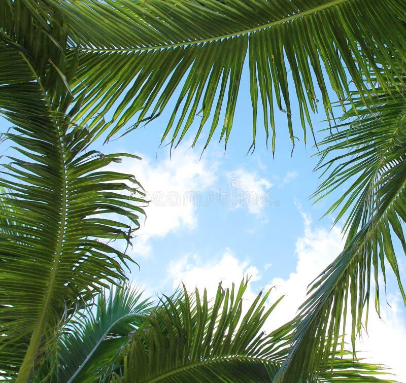 Palmettes et le ciel, cadre photos libres de droits