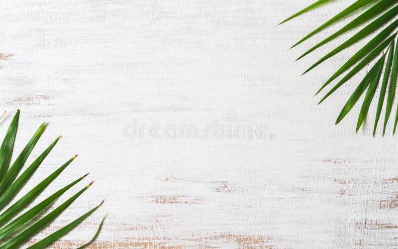 Palmettes tropicales de nature verte sur le fond en bois blanc grunge Vue sup?rieure avec l'espace de copie Concept de fond d'?t? image libre de droits