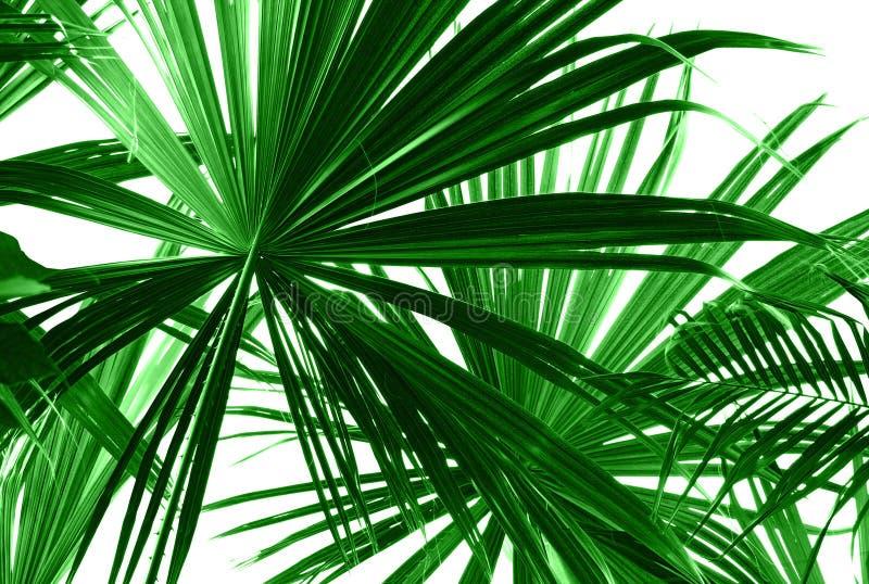 Palmettes vertes abstraites photographie stock