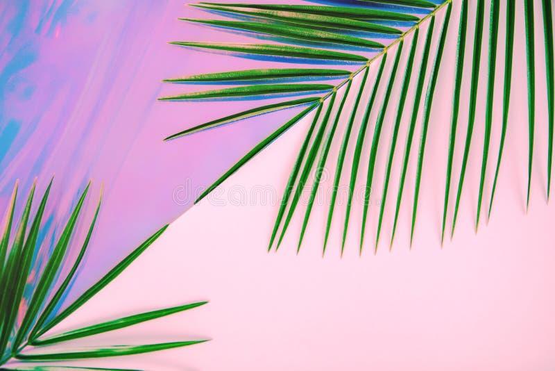 Palmettes vertes sur le fond olographe color? en pastel image stock