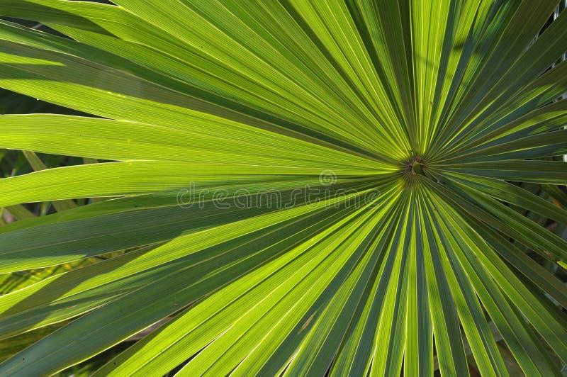 Palmetto illuminato immagini stock libere da diritti