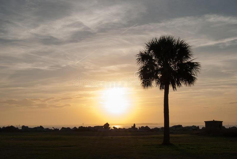 Palmetto at Sunset. The Palmetto is the State tree of South Carolina. This one stands along the Charleston Harbor near Fort Moultrie National Monument stock photos