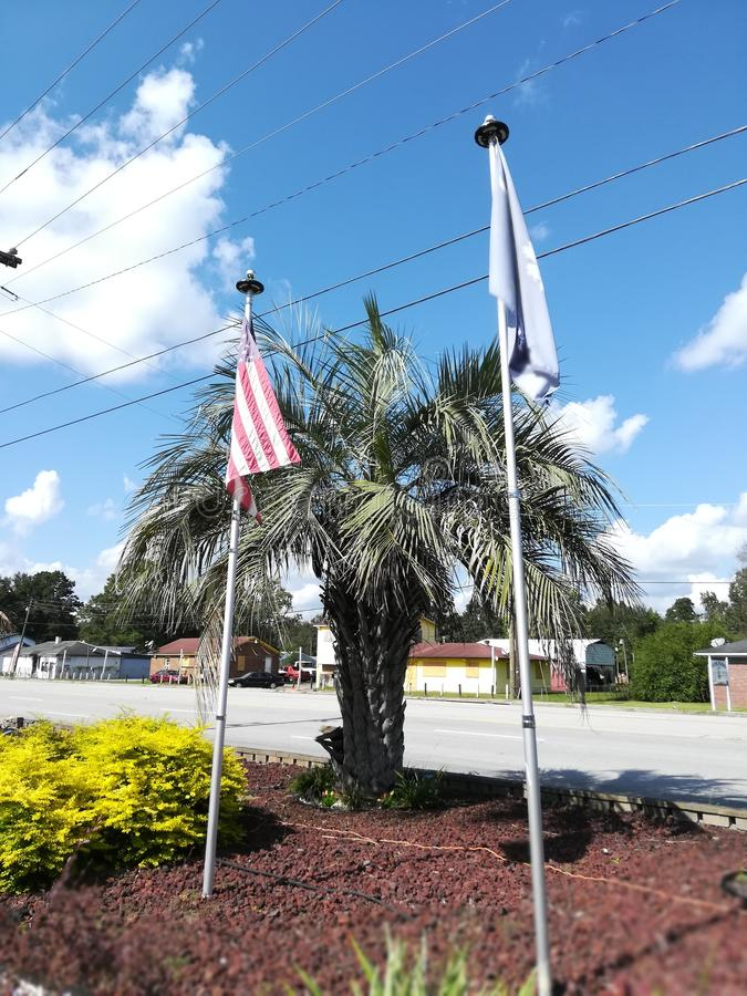 The palmetto. White clouds flags palmetto tree stock photography