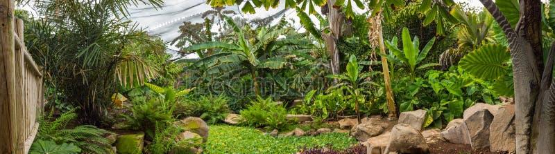 Palmetum von Santa Cruz de Tenerife, Kanarische Inseln stockbild