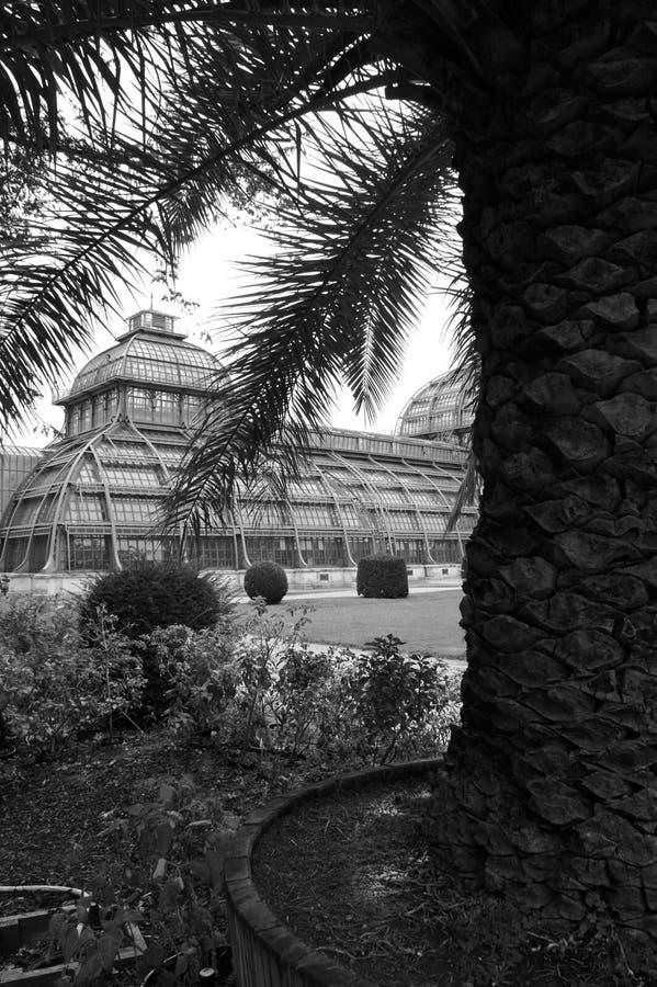 Palmhouse photographie stock