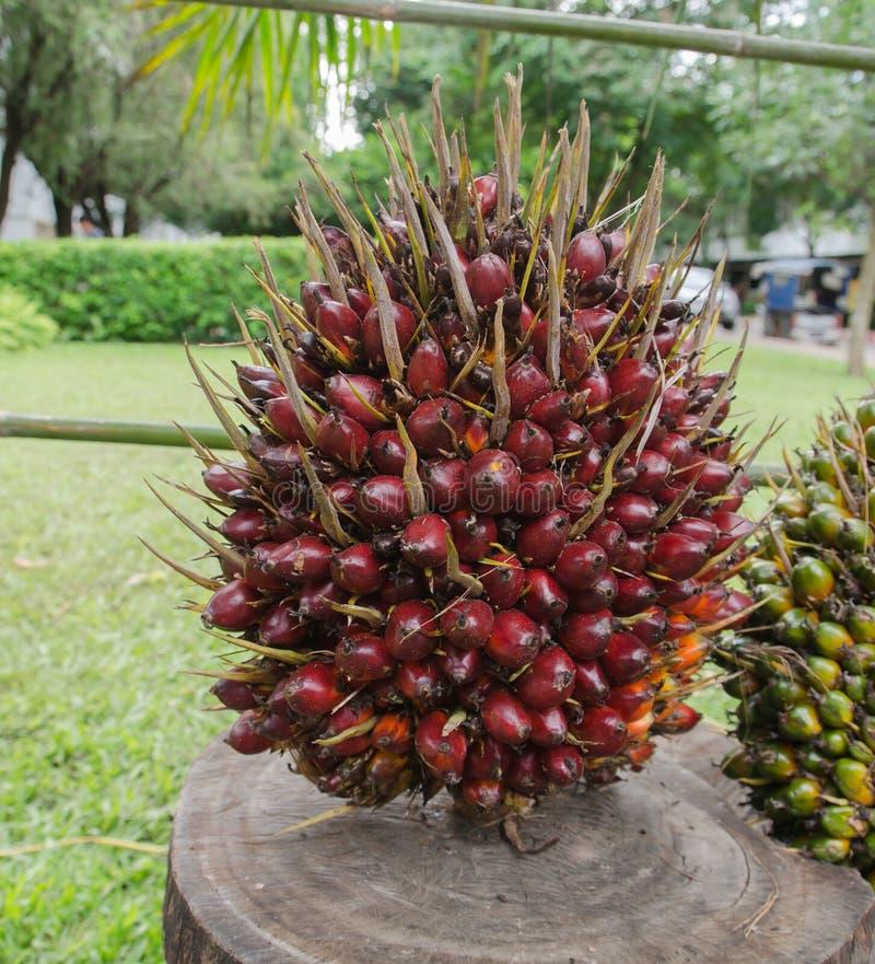 Palmier à huile photographie stock