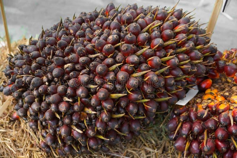 Palmier à huile photos stock