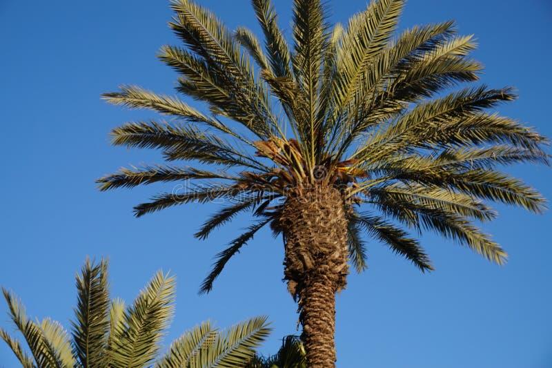 Palmier à Jérusalem la capitale de l'Israël photo stock