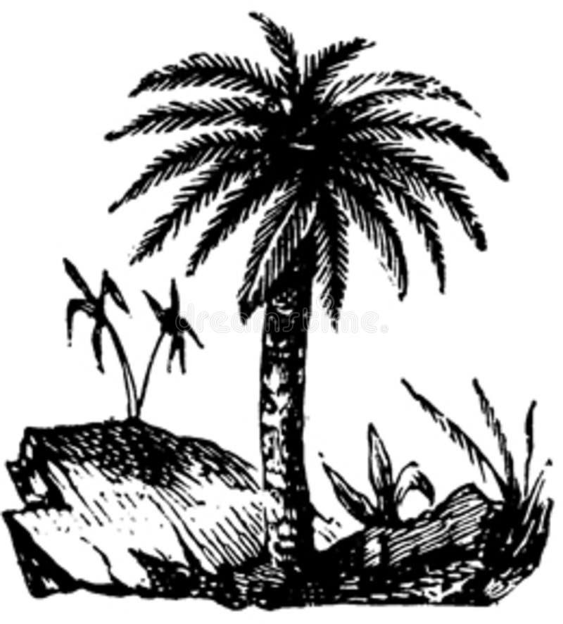 Palmier-001 Free Public Domain Cc0 Image