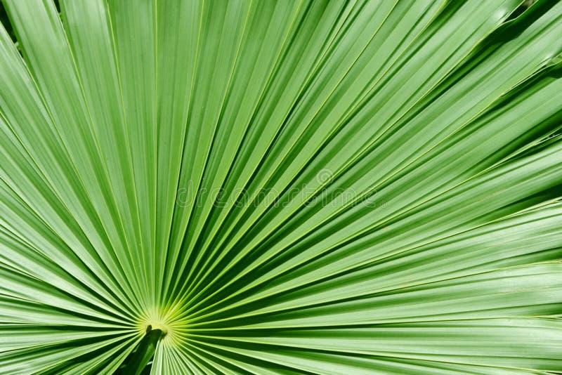 Palmier images libres de droits